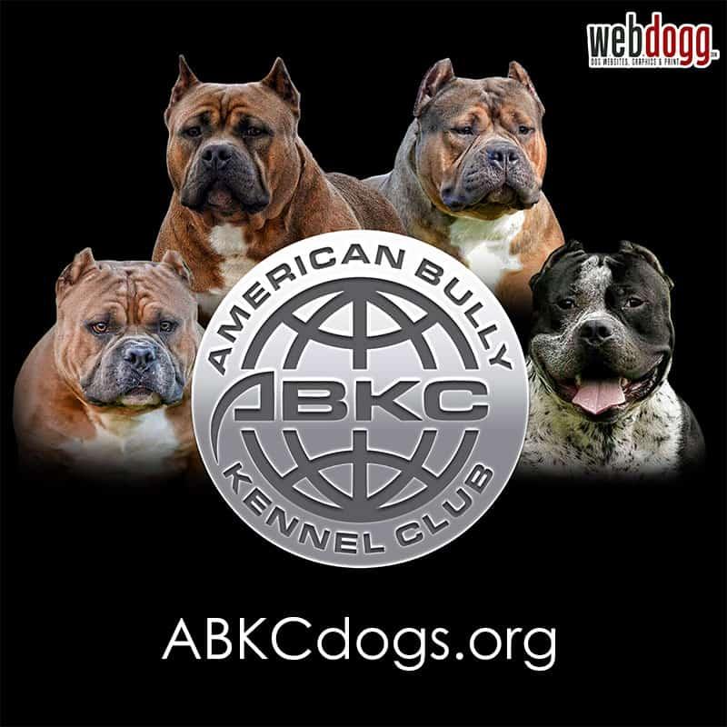 American Bully Kennel Club (ABKC) - Logo Design - WebDogg ...