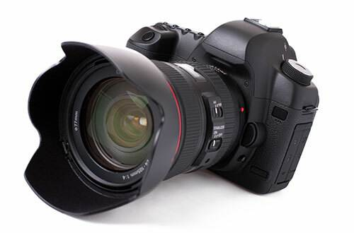 DSLR Camera - Dog Photography