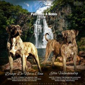 Dog Breeder Graphics & Banners - WEBDOGG