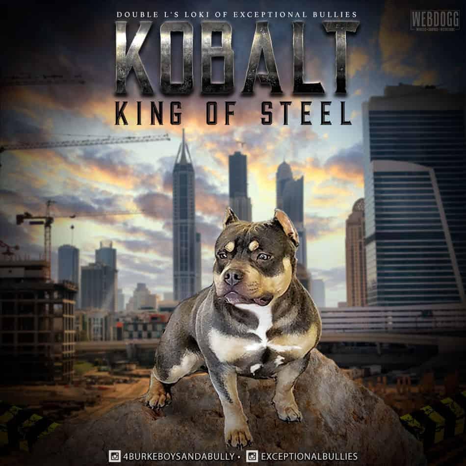 dog breeder banners  dog kennels graphics  show dog