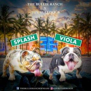 The Bullie Ranch of Miami