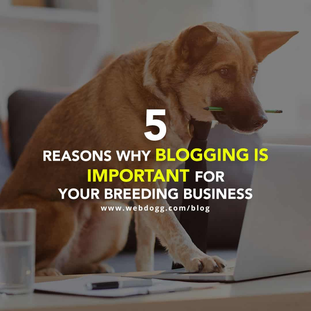5 Reasons Why Blogging is Important for Your Breeding Business
