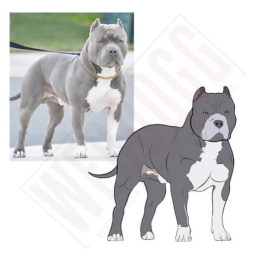 American Bully - Photo to Vector