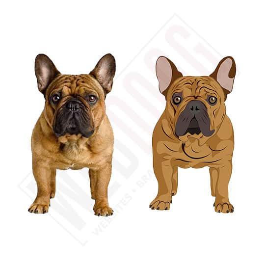 French Bulldog - Photo to Vector